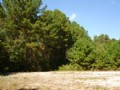8 Acres With Well