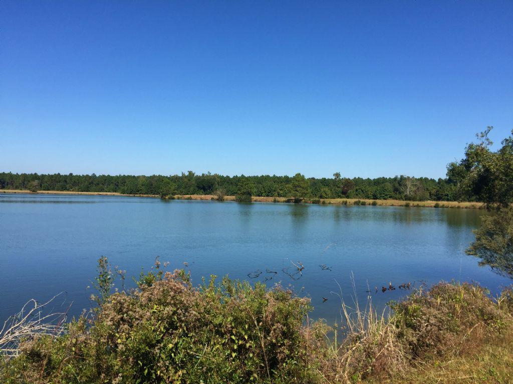 Beautiful 580 Acre Timberland Tract : Woodbine : Camden County : Georgia