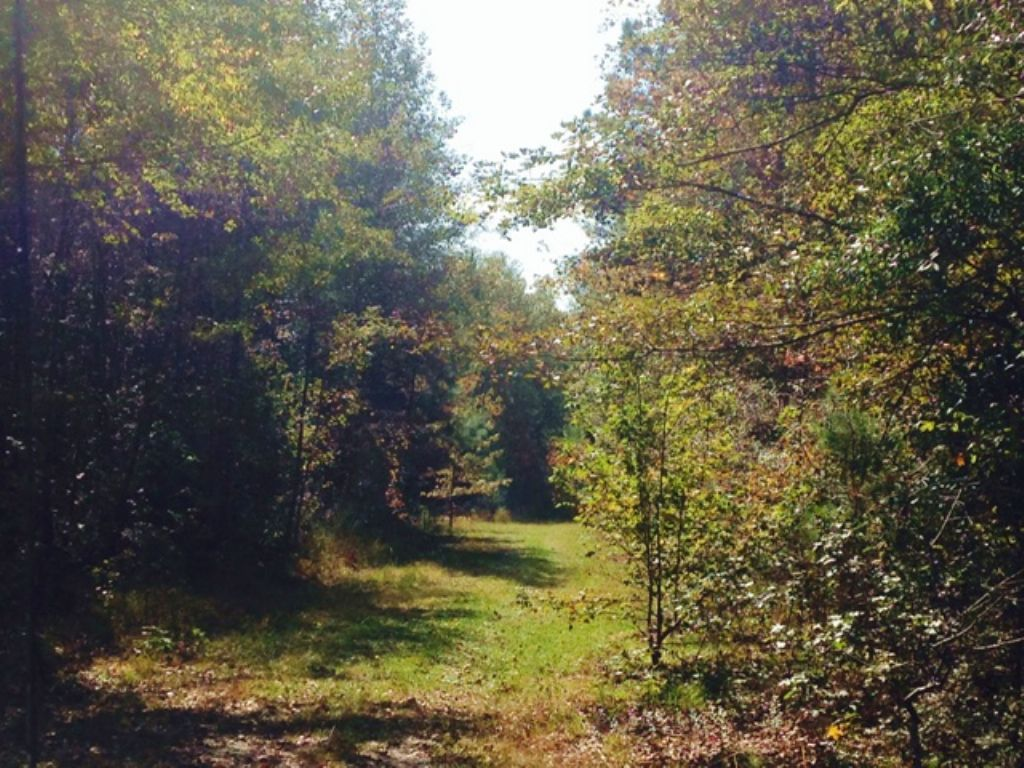 Deep Woods Well : Portal : Bulloch County : Georgia