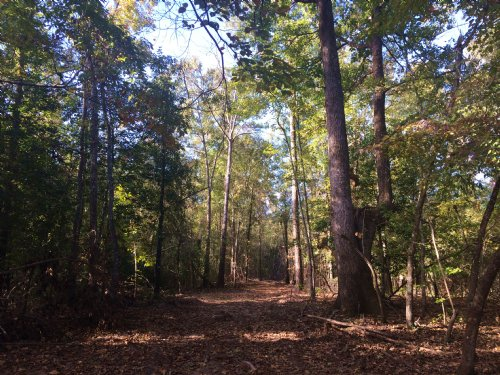Pine Bloom Sportsman Tract : Sparta : Hancock County : Georgia