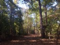 Pine Bloom Sportsman Tract