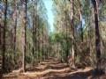 Patsiliga Creek Wildlife Corridor