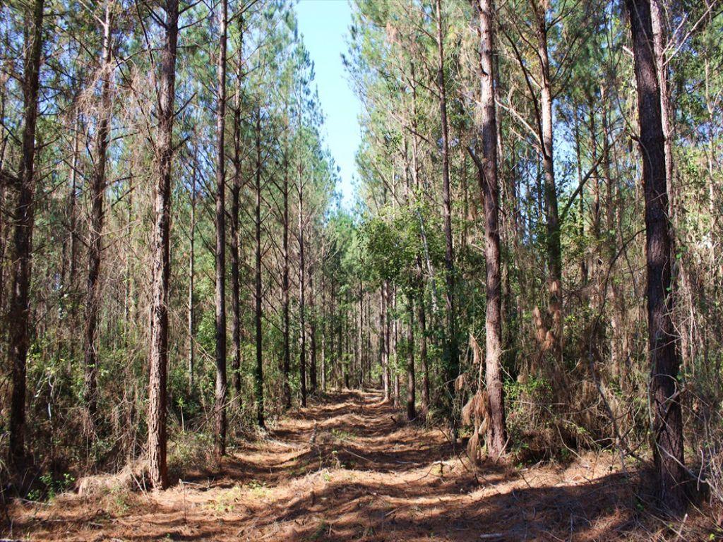 Patsiliga Creek Wildlife Corridor : Butler : Taylor County : Georgia