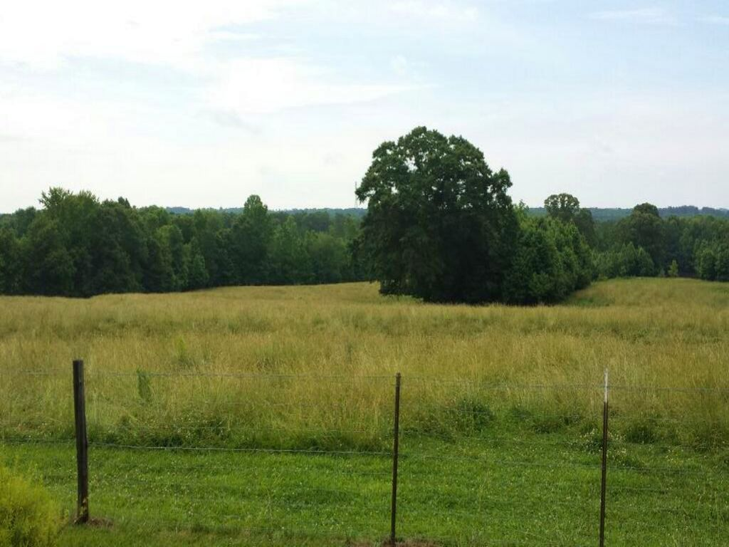 Beautiful Cattle Farm : Bremen : Haralson County : Georgia