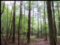 143 Acres Of Investment/hunting