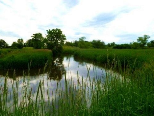 Amazing 60 Acres Untamed Land : Belleville : Dane County : Wisconsin