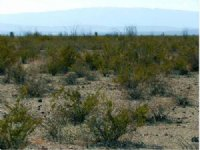 10 Acres Of Vacant Land For Sale