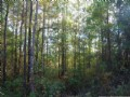 Timber And Hunting Tract