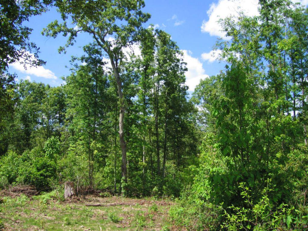 Direct Lake Access W/ $500 Down : Winona : Shannon County : Missouri