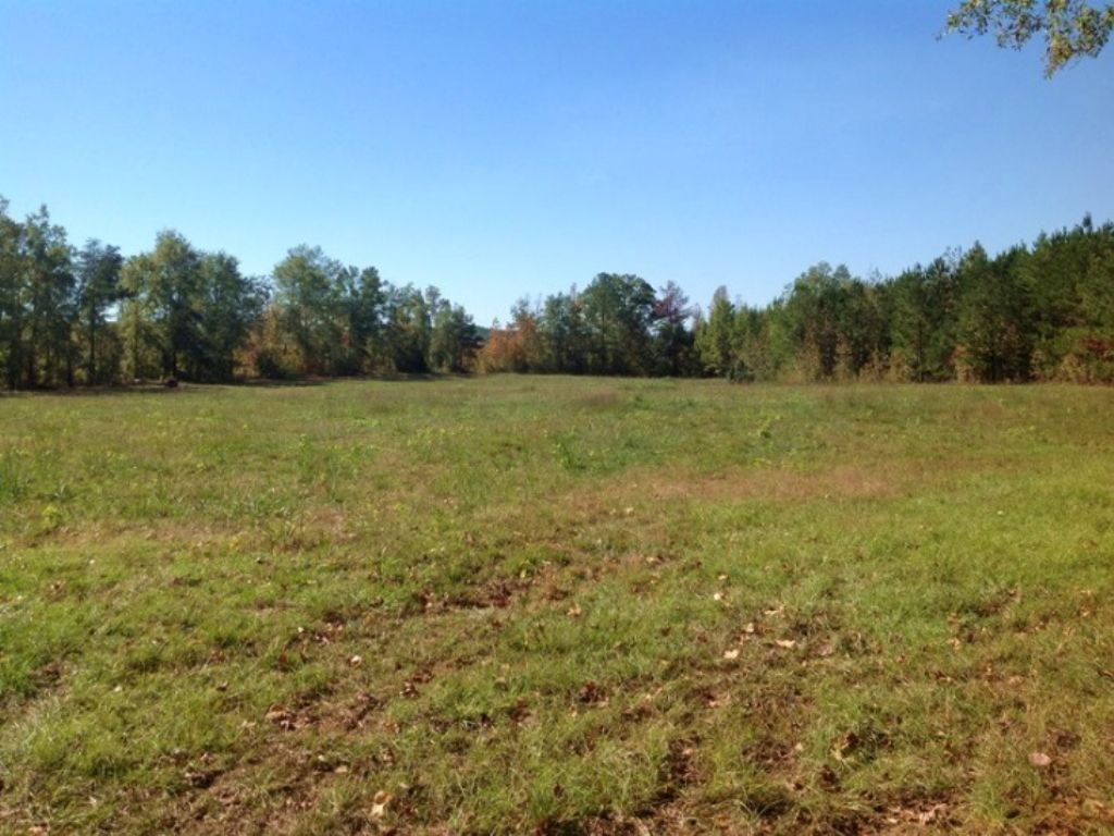 Big Sandy Creek Tract : Cottondale : Tuscaloosa County : Alabama
