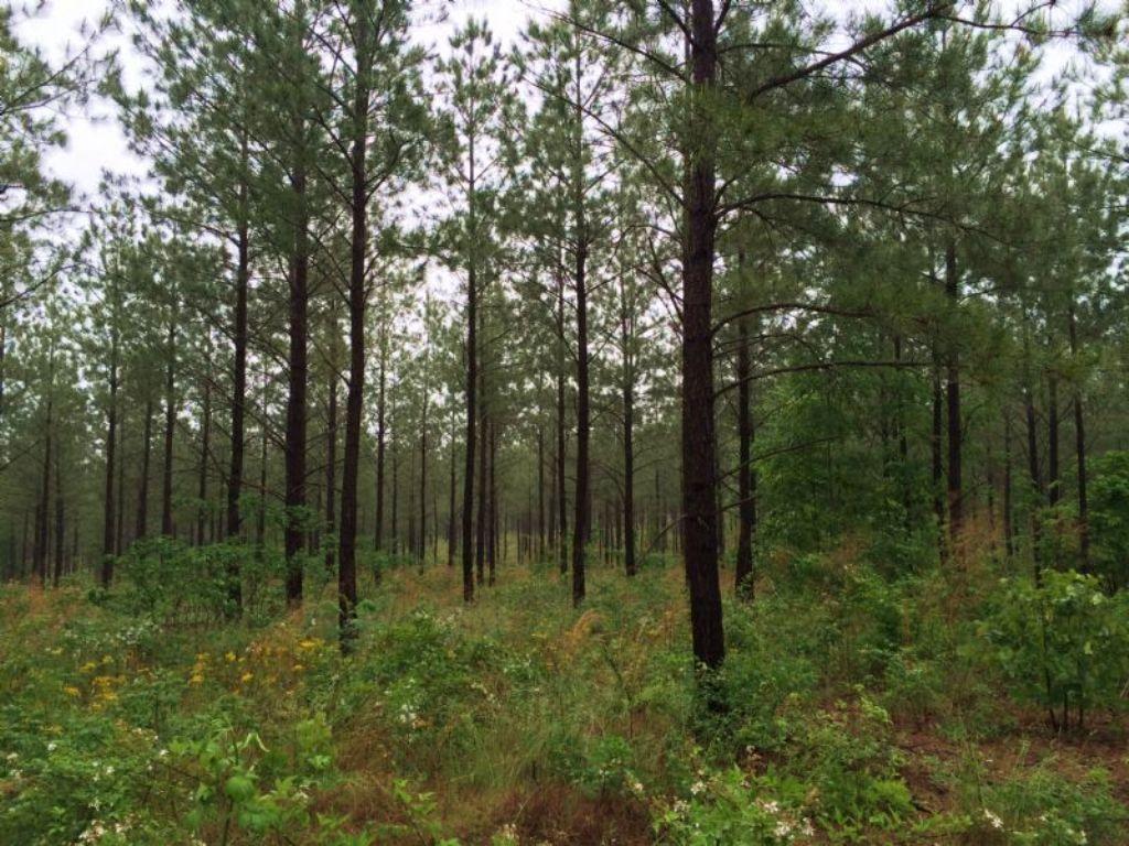 61 Acres : Cedartown : Polk County : Georgia