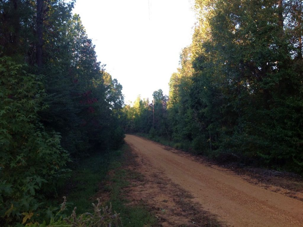 91 Acres Knox Tract : Marion : Perry County : Alabama