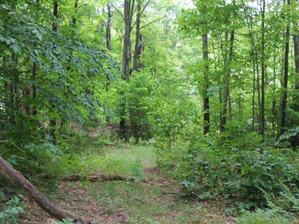 Hunting Land In Parish 63 Acres : Parish : Oswego County : New York