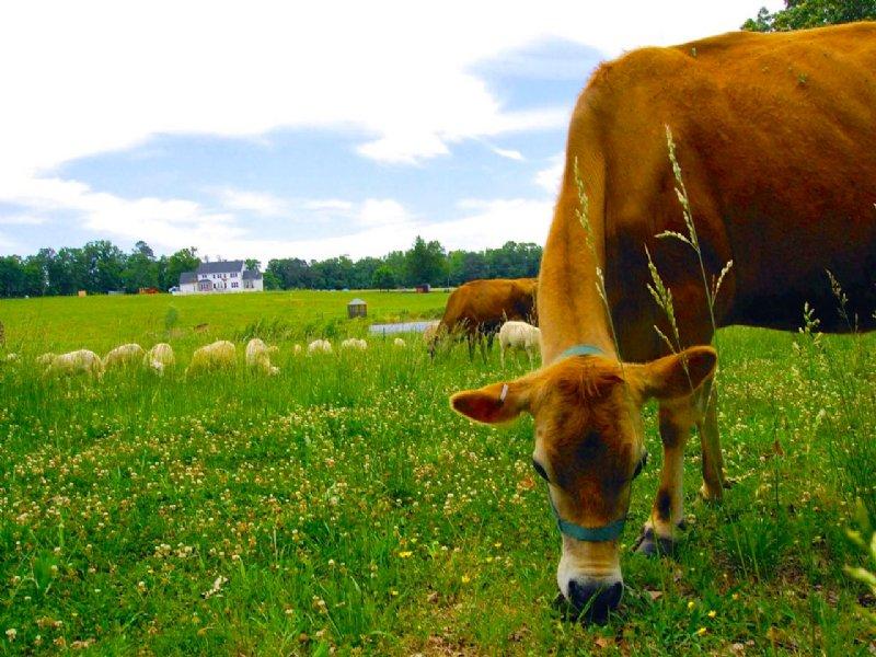Organic Farm With Beautiful Home : Elberton : Elbert County : Georgia