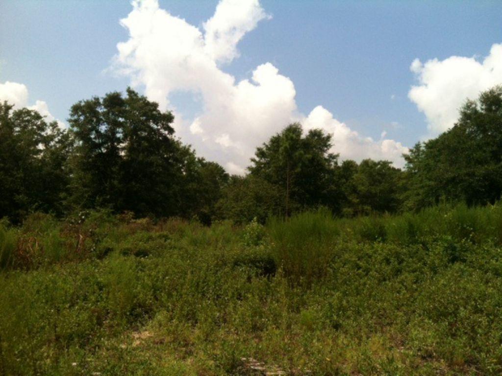 Small Hunting Tract : Lumpkin : Stewart County : Georgia