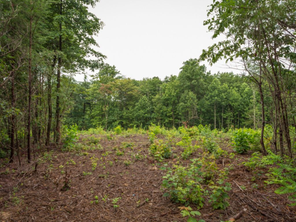 Ww: Great Building Site W/ Acreage : Signal Mountain : Sequatchie County : Tennessee