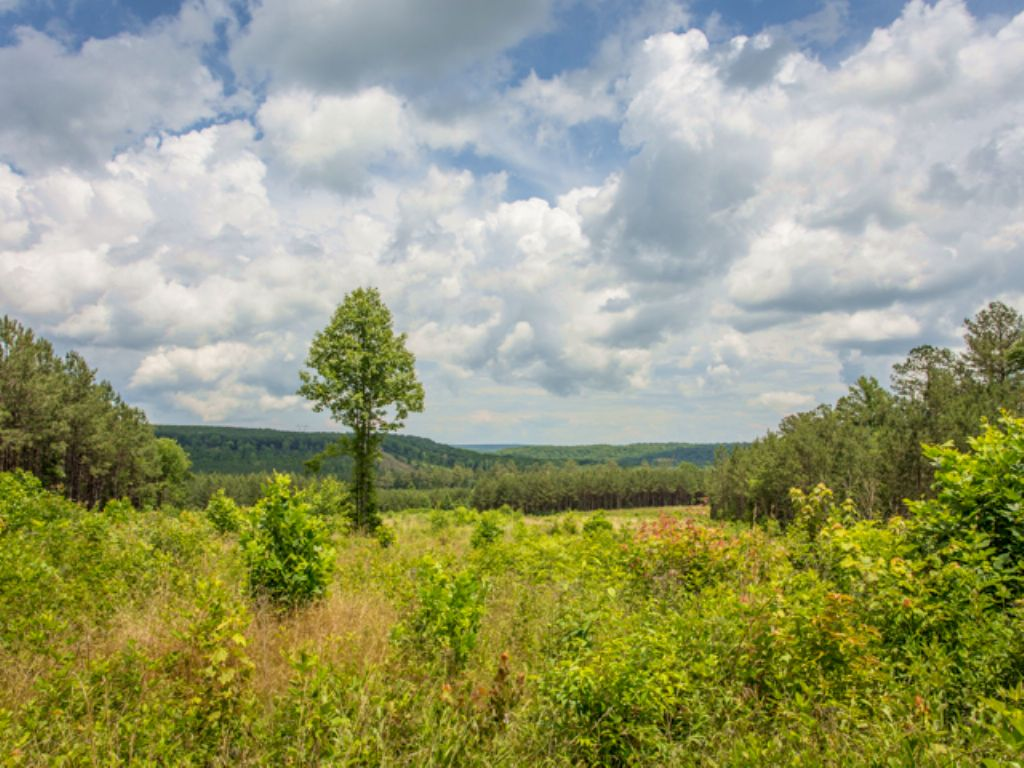 Ww: Stunning Views From Signal Mt : Signal Mountain : Sequatchie County : Tennessee