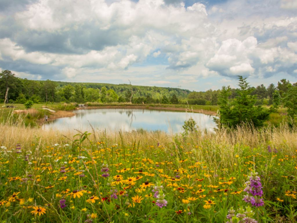 Ww: 9 Acres With Pond & Creek Acces : Signal Mountain : Sequatchie County : Tennessee