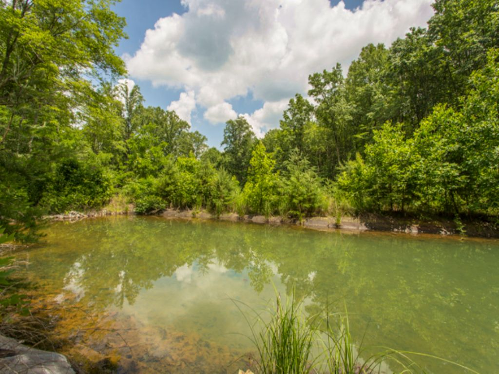 Ww: Mountain Creek In Your Backyard : Signal Mountain : Sequatchie County : Tennessee