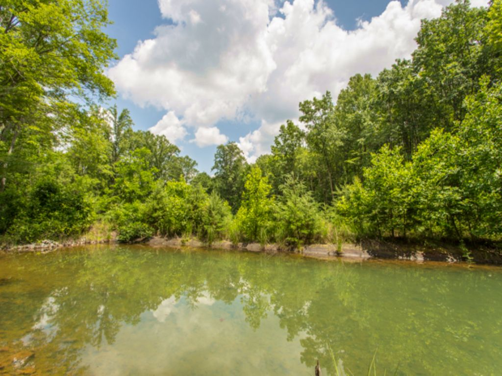 Ww: Private Pond & Creek Access : Signal Mountain : Sequatchie County : Tennessee