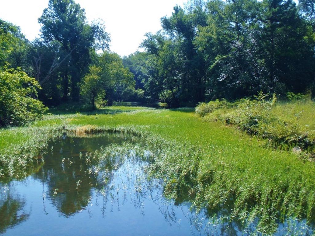 Little River Tract 1a : Nashoba : Pushmataha County : Oklahoma