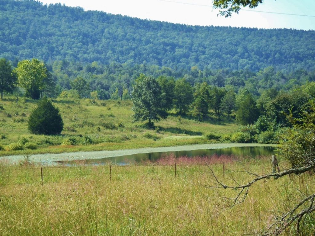 Little River Tract 4 : Nashoba : Pushmataha County : Oklahoma