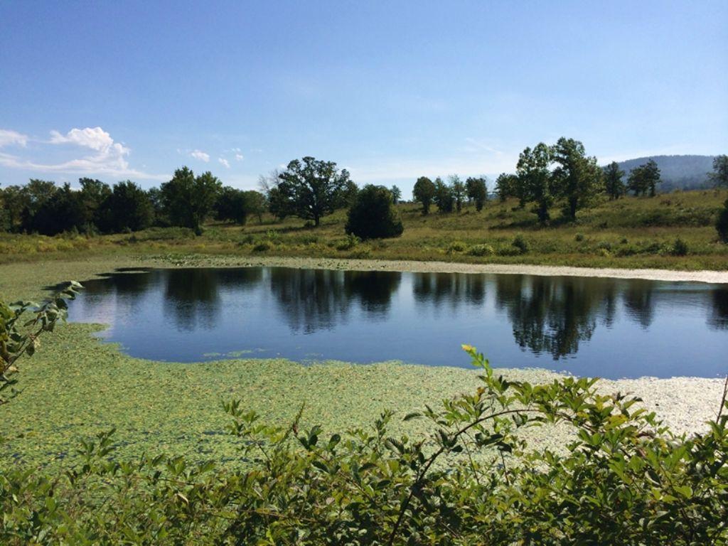 Little River Tract 5 : Nashoba : Pushmataha County : Oklahoma