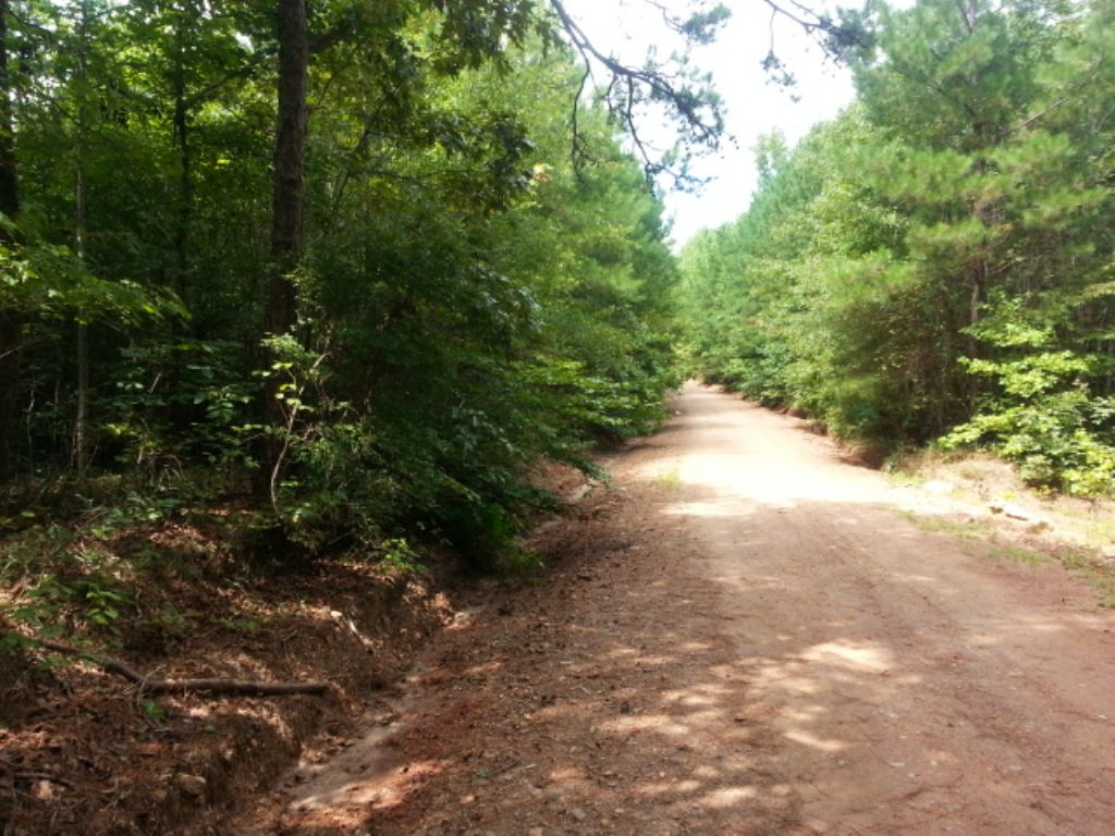 40+/- Acres Timberland : Wadley : Randolph County : Alabama