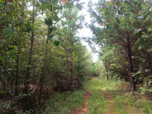 72+/- Acres Timberland : Lineville : Clay County : Alabama