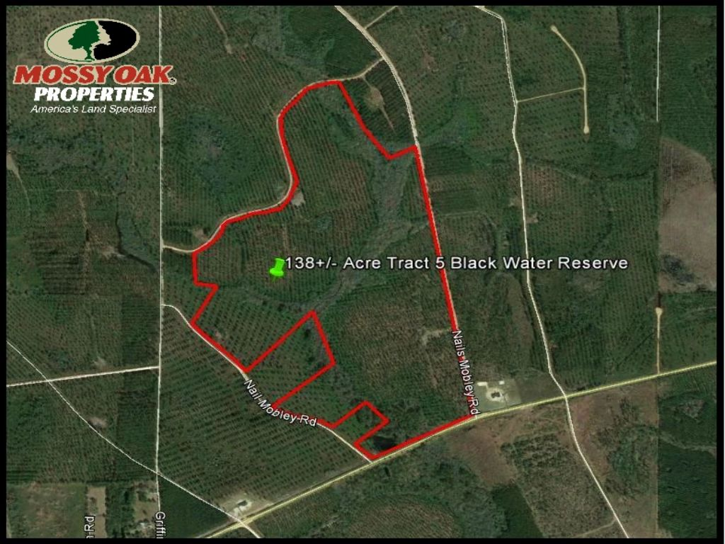 Timber Land For Sale : Baxley : Appling County : Georgia