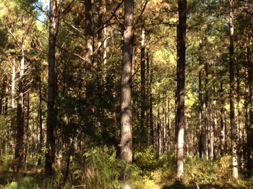 100 Acres Tradewinds Street : Orangeburg : South Carolina