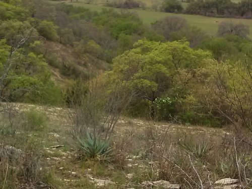 208+ Acres With Beautiful Views : Dublin : Comanche County : Texas
