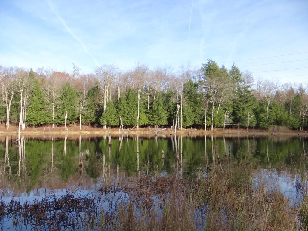 Hunting Land Electric Available : Burlington : Otsego County : New York