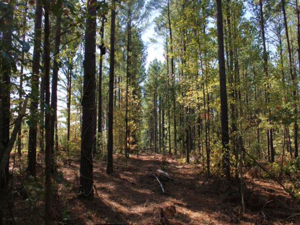 175 Acre Hunting Tract : Ellaville : Schley County : Georgia