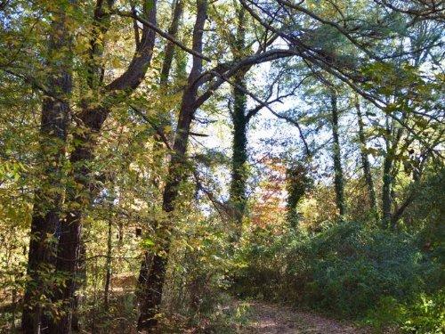 54 Acre Old Farm Near Woodruff : Woodruff : Spartanburg County : South Carolina