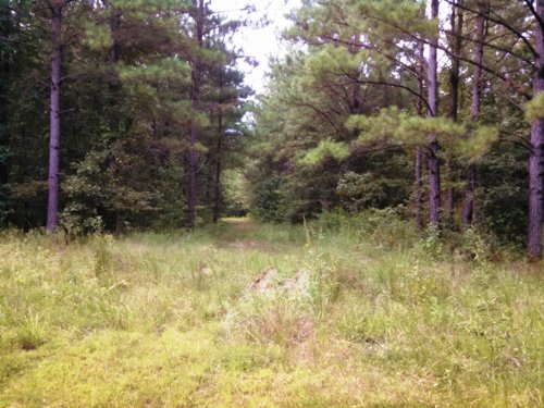 80 Acres Of Timberland : Starkville : Oktibbeha County : Mississippi