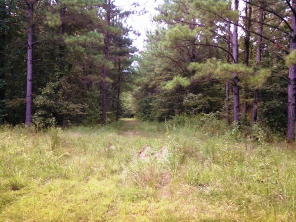 80 Acres Of Timberland : Starkville : Oktibbeha County : Mississippi