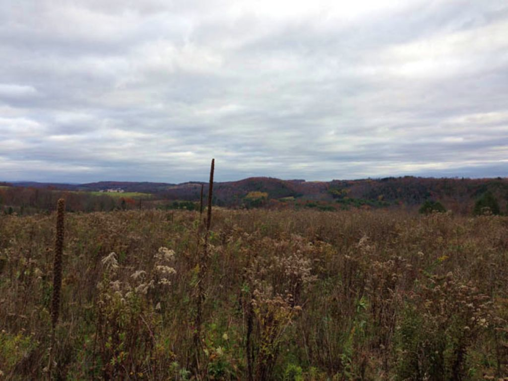 51 +/- Acres Of Land For Sale : Stillwater : Columbia County : Pennsylvania