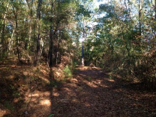 National Forest Tract : Marion : Perry County : Alabama