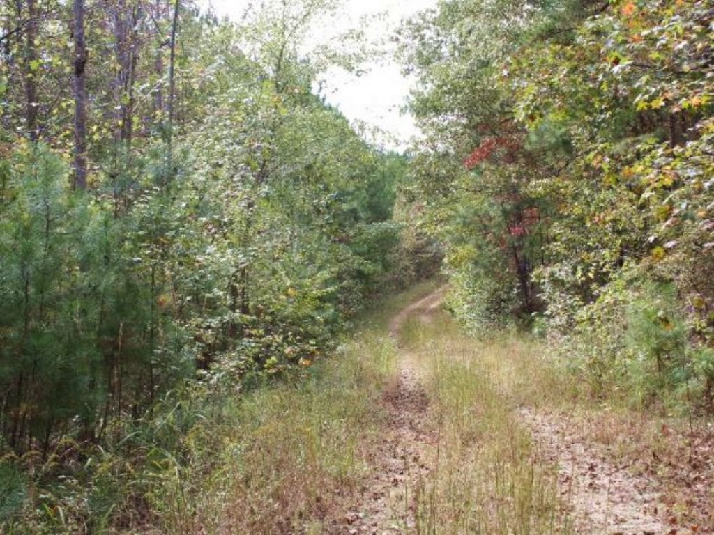 Online Auction 55+/- Acres Of Land : Tallapoosa : Haralson County : Georgia