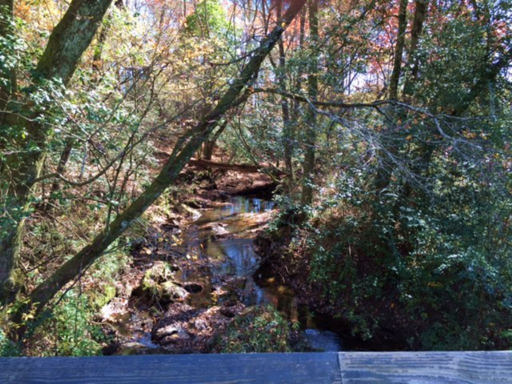 214+/- Acres Hunting Land : Tracy City : Grundy County : Tennessee