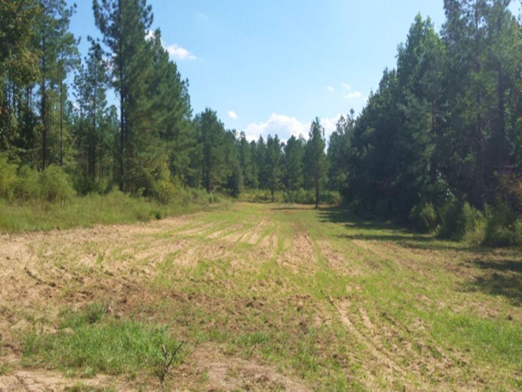 Hunter Pines : Bartow : Jefferson County : Georgia