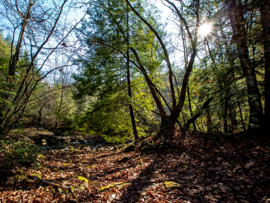 Cc: 5+ Acres Only $17,900 : Grandview : Rhea County : Tennessee