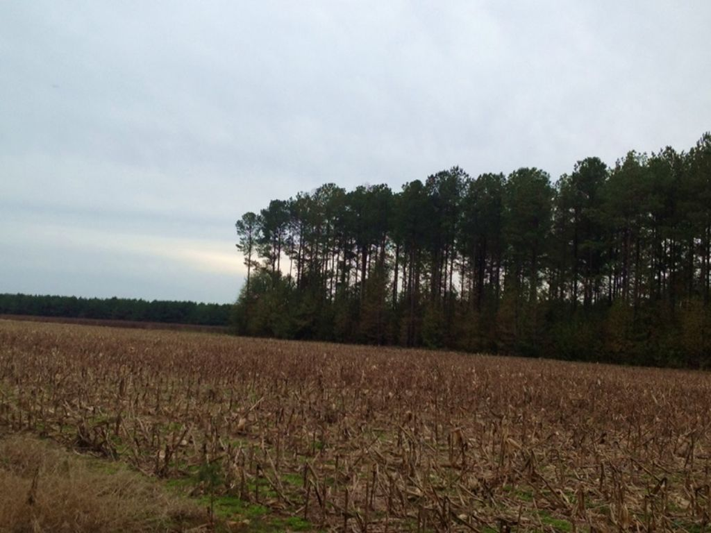 301 Acres In Heiberger : Marion : Perry County : Alabama