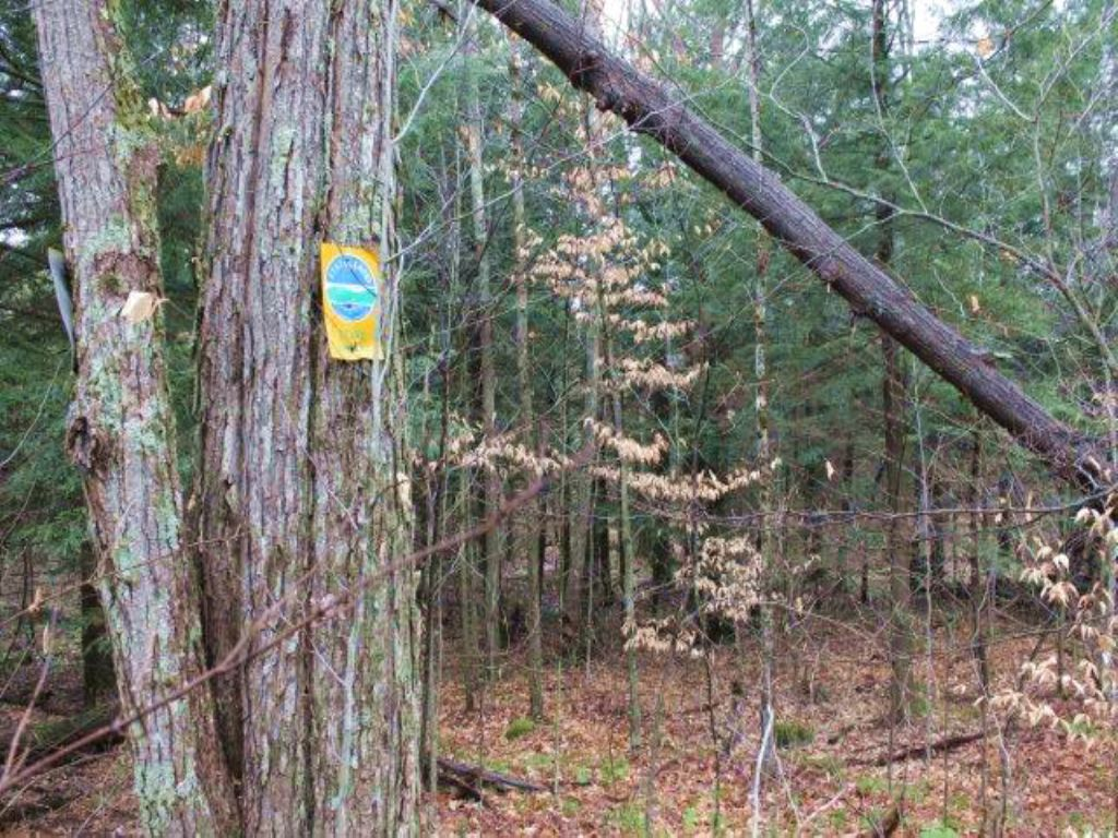 Land Bordering State Forest 5 Ac : Diana : Lewis County : New York