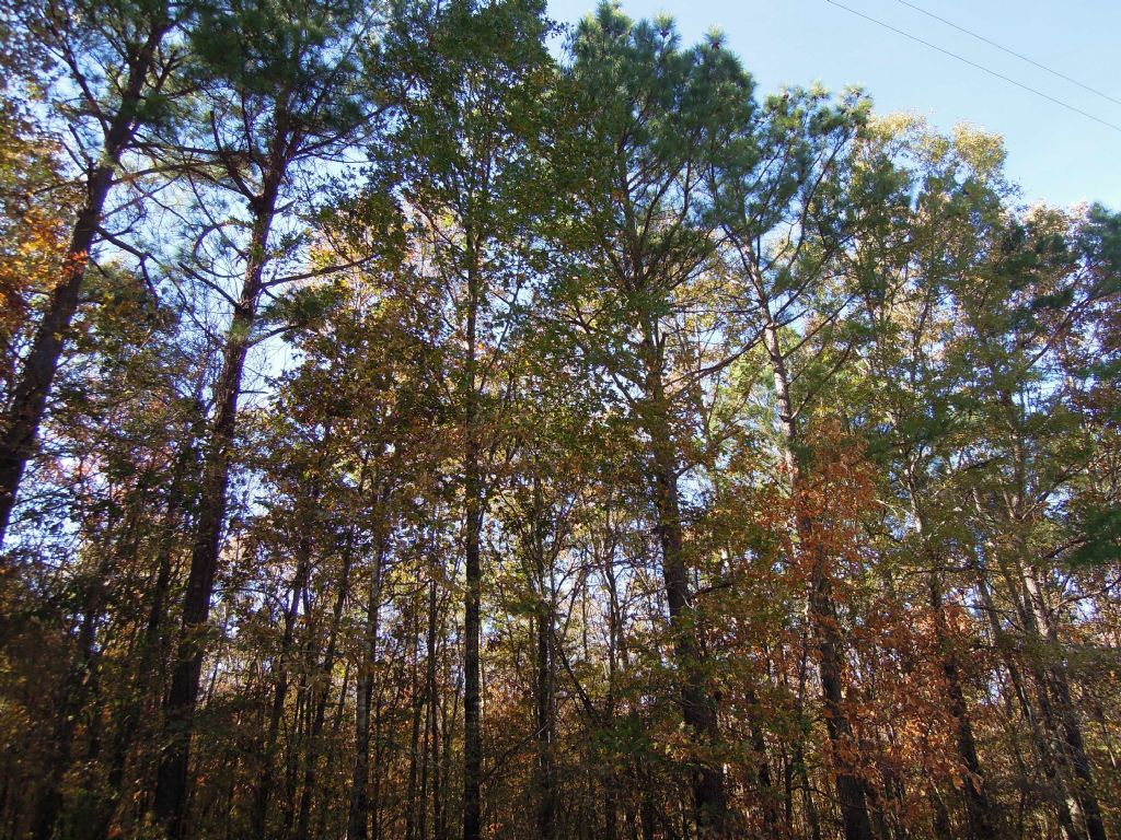 100+/- Acres Of Timber With Creek : Casscoe : Arkansas County : Arkansas
