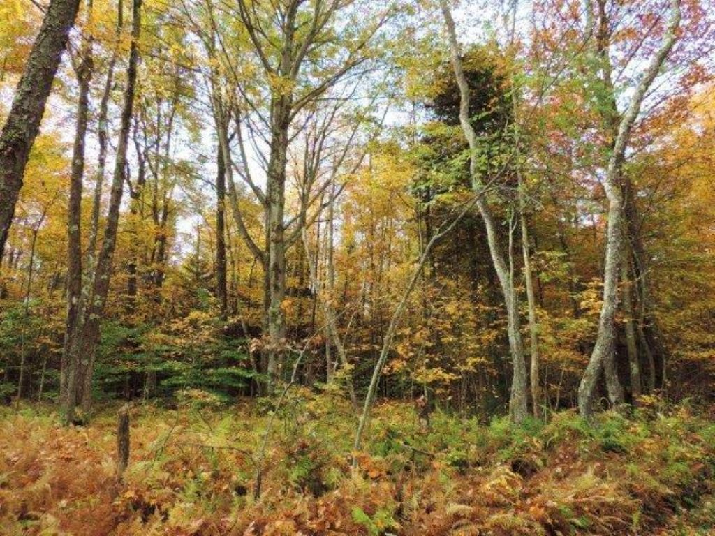 Land For Sale In The Adirondacks : Russia : Herkimer County : New York