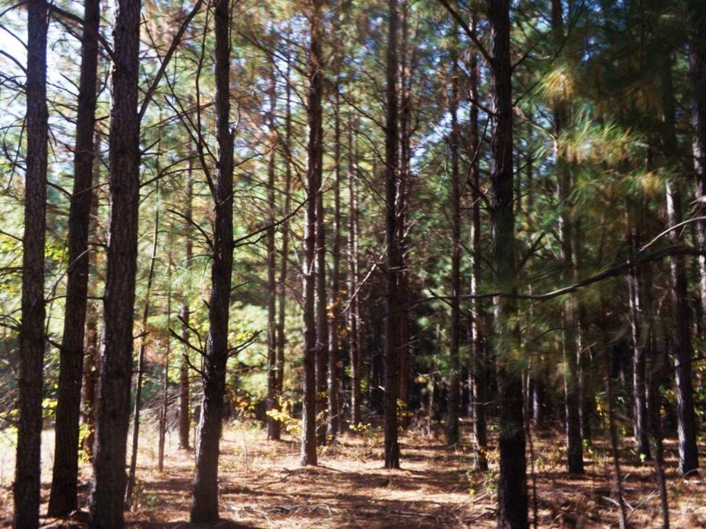Durden Farm Tract 1 : Garfield : Emanuel County : Georgia