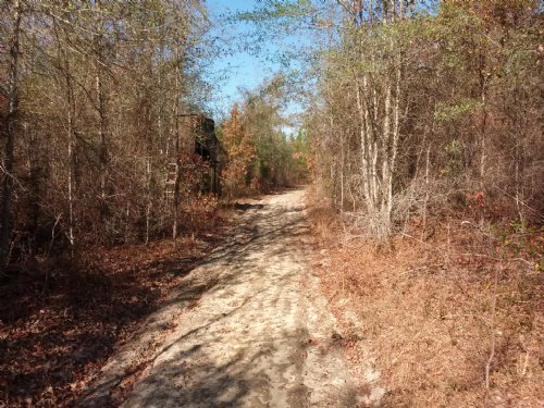 Buck Trails Tract : Adrian : Emanuel County : Georgia
