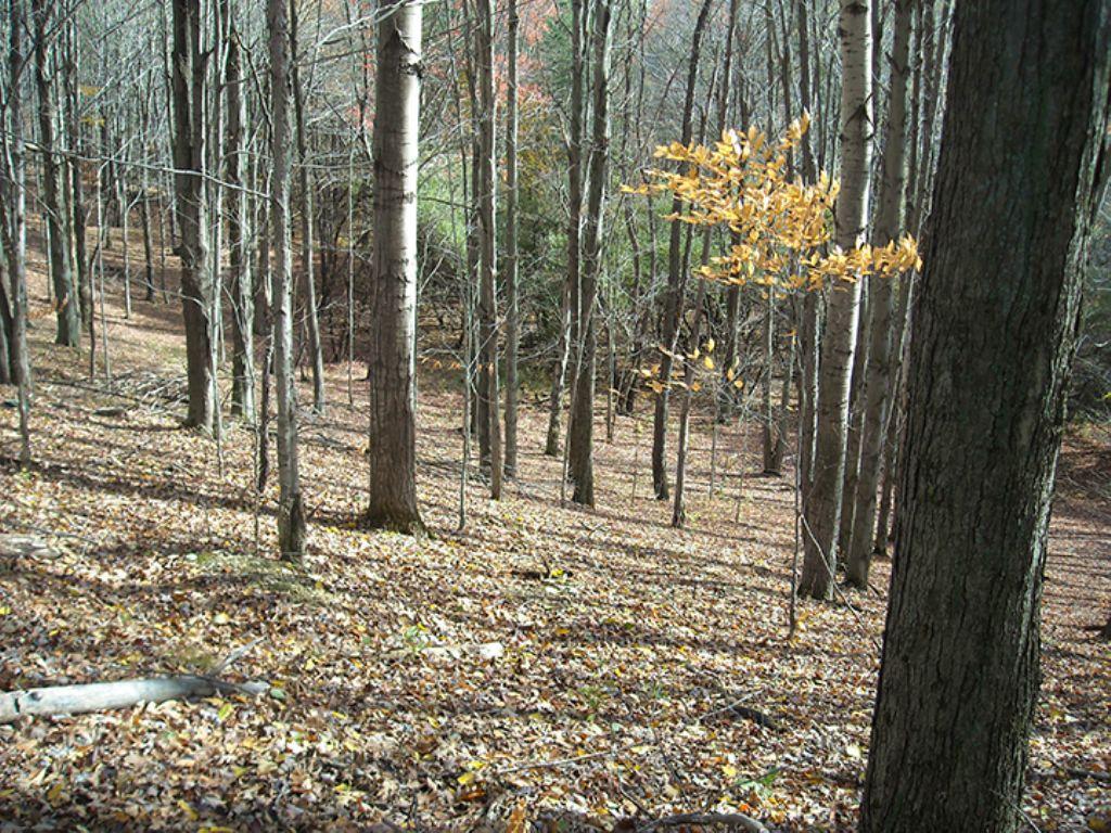 Hunting Land Finger Lakes Region : Fremont : Steuben County : New York